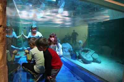 SeaQuest Aquarium Birthday Package